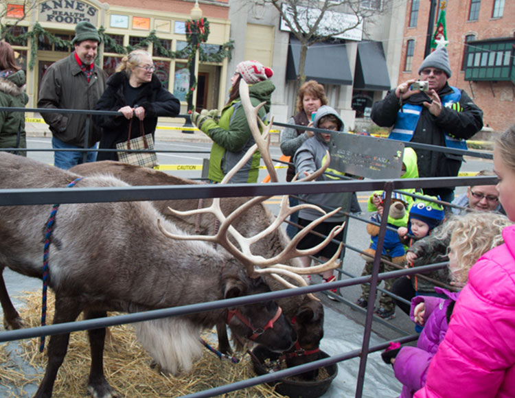Jingle & Mingle Reindeer